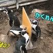 なんともゆかいなペンギン達