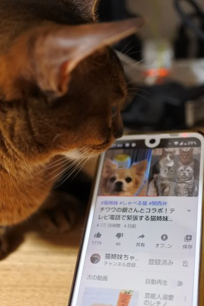 チャンネル 猫 姉妹