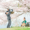 桜ロケ七五三フォト(お蔵出し)の画像