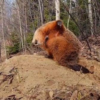 ケベックの野生動物たちが可愛すぎる(のでシェアしたい)
