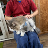 アニマルオステオパシー 猫の画像