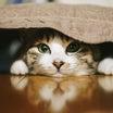 大切な友達がいじめられた猫が取った行動