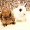ウサギの見学予約について
