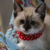 わが家の子猫の保育園ようこそ可愛い新入生&まだまだ続く茶トラっ子
