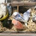 テラポリス  羽衣セキセイインコ  アキクサインコ  リクガメの繁殖、販売、ブリーダー、飼育相談もお気軽に