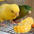 千葉県魚貝鳥類情報