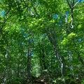 新緑の船形山と鈴沼  2020年5月29日
