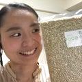 若玄米、滋賀県産が発売ーーーー!