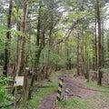 6月2日散策 6.3キロ須山口~御殿庭下Uターン散策