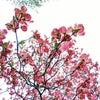 ☆☆チャネリング☆☆ アンドロメダ銀河「インナの美意識」68の画像