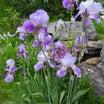 散歩と野鳥と花いっぱい!♪♪