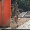 自然の中でリフレッシュ・奈良公園さんぽの画像
