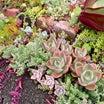 花後が残念な植物と花後が楽しみな植物&不必要なマスク(*´罒`*)ww