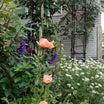 *お気に入りの小さな小さな庭・*初夏から夏の庭へと繋いで・*