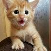 仔猫の里親募集です!!
