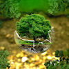 地球は私たちの必要なものを十分に満たしてくれる。しかし、、(by ガンジー)の画像