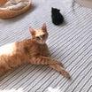 いこちゃんの最近と子猫トライアル
