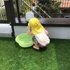 きらきら星COSMOS    ぴちゃぴちゃ水遊びの画像