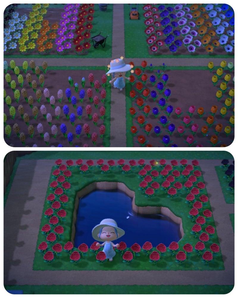 森 青い バラ あつ 【あつ森】青いバラの作り方手順と増やし方【あつまれどうぶつの森】 ゲームエイト