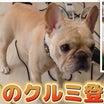 草彅剛くん@ やっと!クルミちゃんが❣️『ユーチュバー草彅チャンネル』に登場❣️