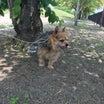 棄てられた犬・殺処分を望む多頭飼育崩壊の飼い主