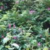 中山風穴地特殊植物群落エリアの画像