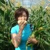 「ウレシパ・マルシェ」産地直送!富良野の旬をお届けします〜!の画像