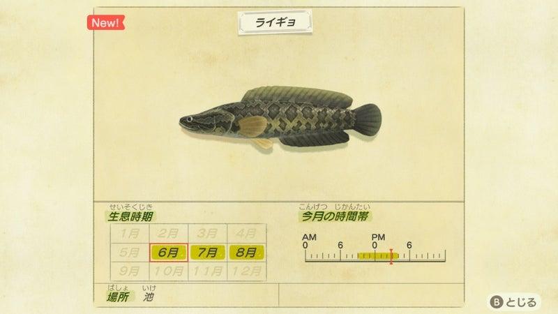 南半球 あつ 森魚