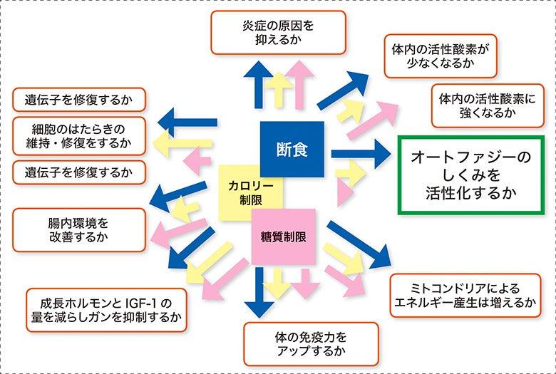オートファジー 活性化 方法