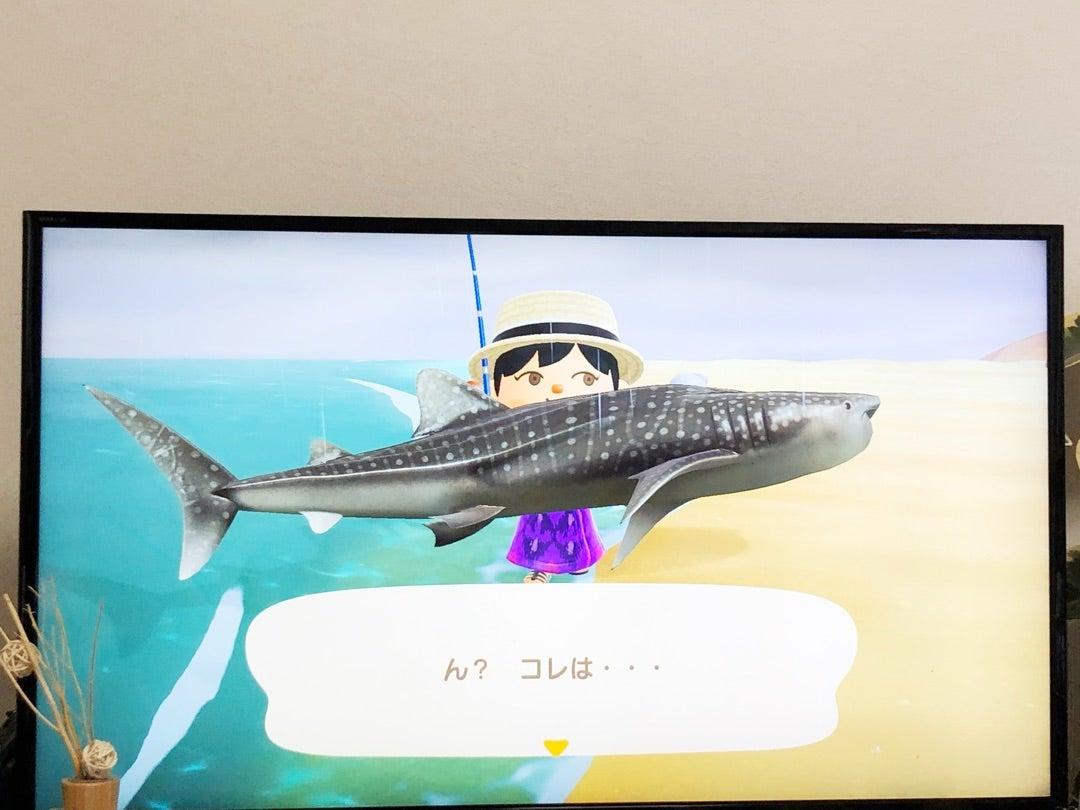 種類 あつ の 森 サメ
