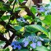 紫陽花✨の画像
