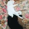 猫の寝相って面白いwの画像