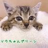 子猫のごはんと多頭用の犬ごはんを募集させてくださいの画像