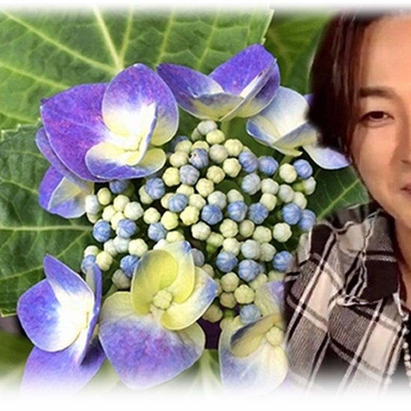 惠 ちゃん ファン の ブログ もこもこ