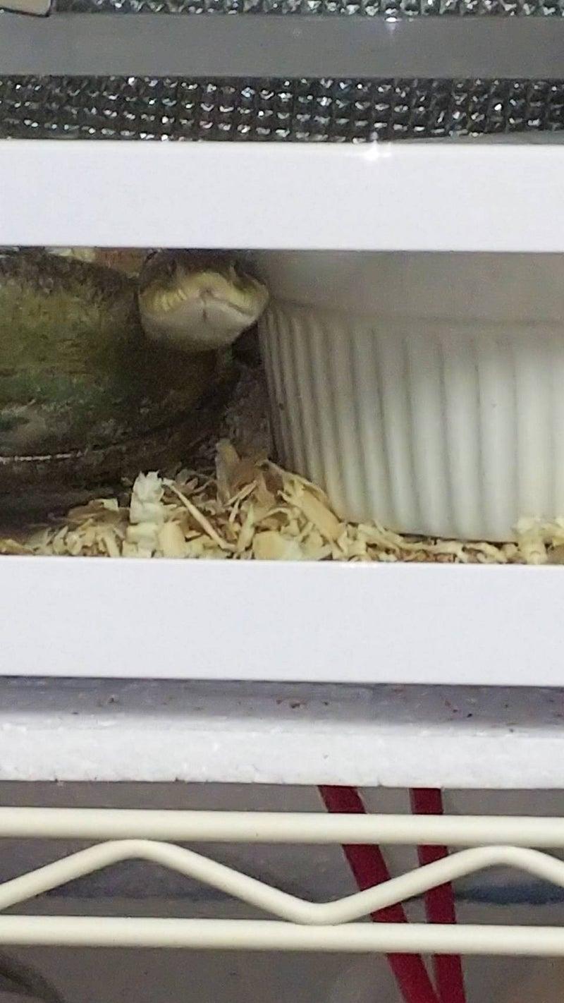 蛇さんが卵を産んだ!!!