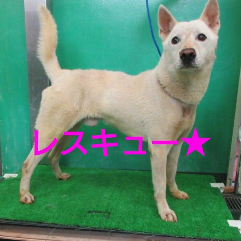 動物 愛護 センター 沖縄