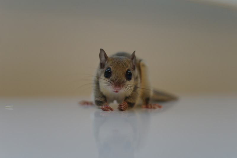 可愛い小動物