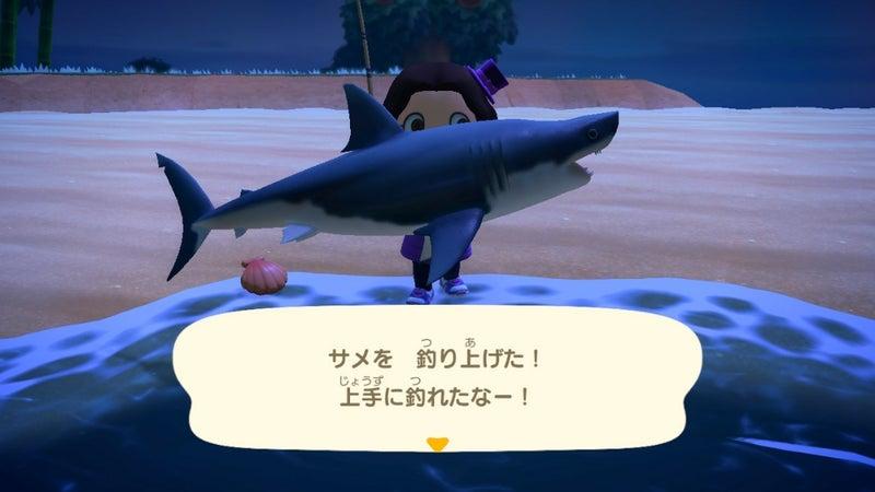 あつ森 サメ模型