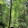 森林浴&ラズベリーピッキングの画像