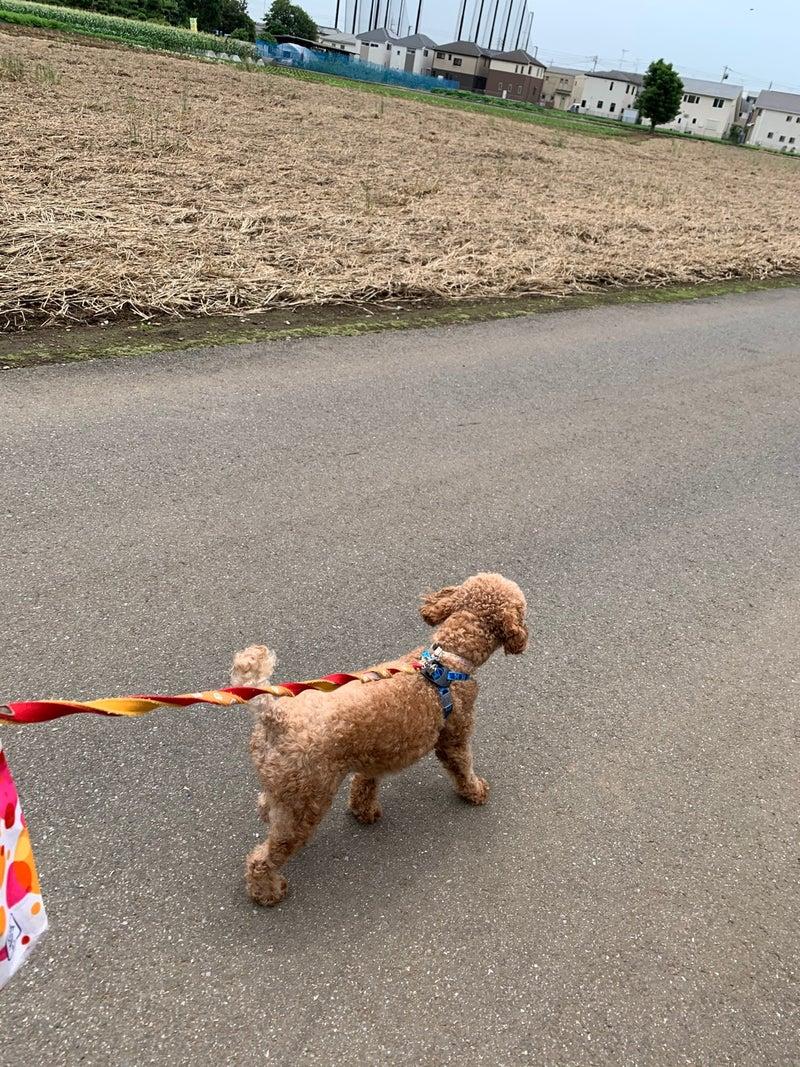 狂犬病 注射 散歩