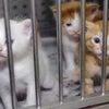 【署名】犬猫殺処分ゼロへ!各都道府県に公設の動物シェルターを!の画像