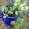 (悲報)虫除けだと思って除草剤を撒いてオーガニック野菜を枯らした件。SBSラジオ!の画像