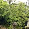 松山庭園美術館「ねこ猫展覧会」BASAC賞決定のご報告の画像