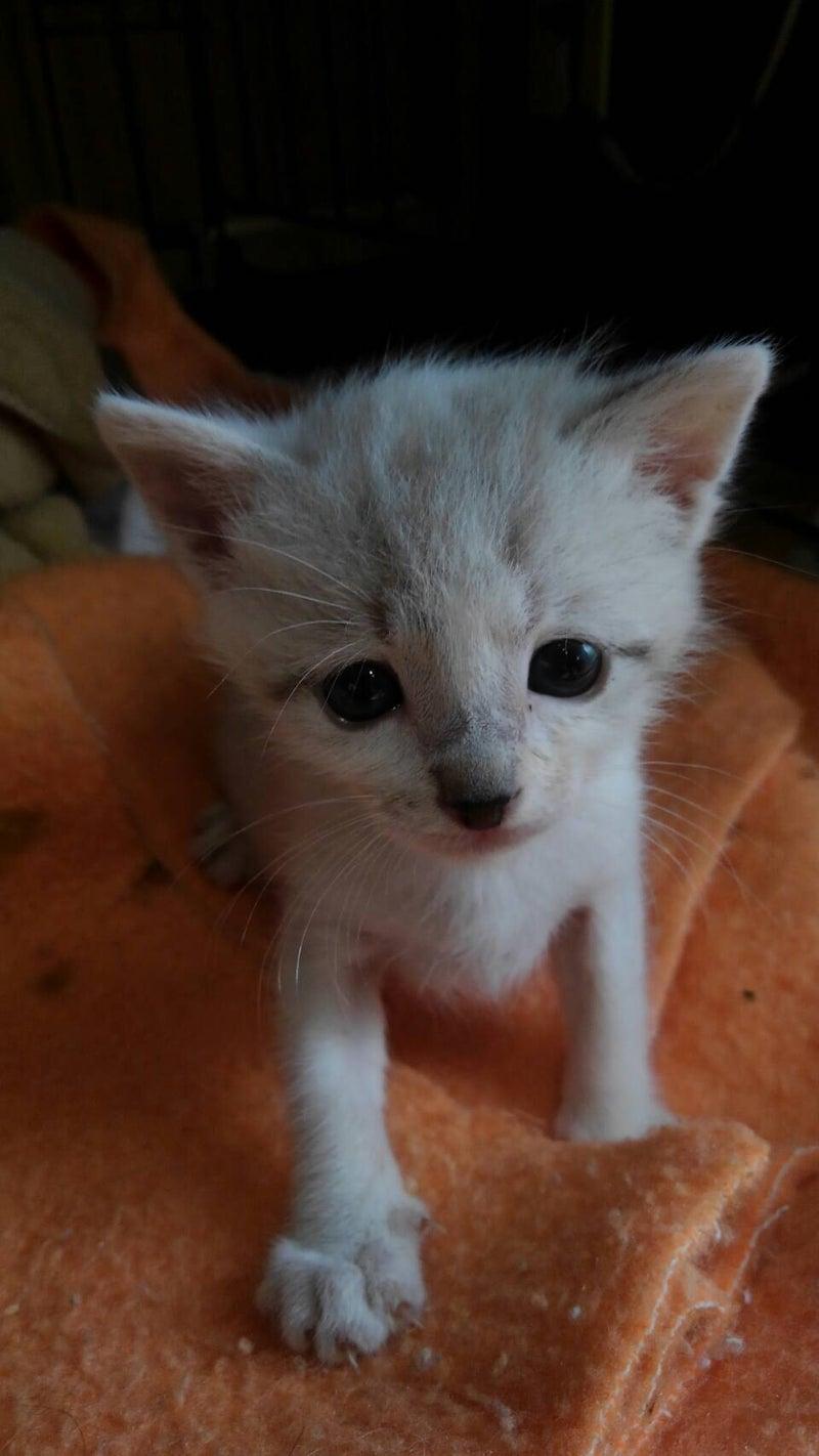ケージ いつまで 子猫
