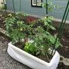 プランター菜園 成長記録 その6の画像