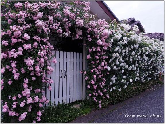 つるバラの家
