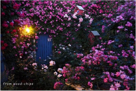 小さなバラの家
