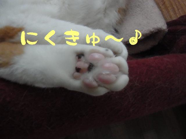 にくきゅ~♪