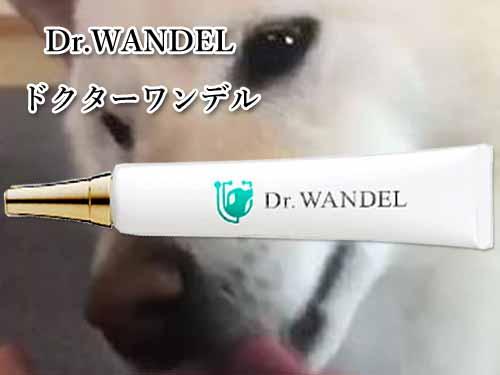 人間 ドクターワンデル