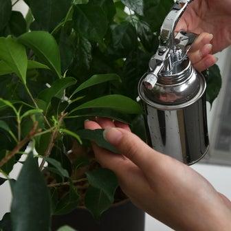 ズボラでも大丈夫!簡単で育てやすい観葉植物4選